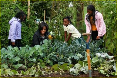 Every Saturday: BLACK GirLS GARDEN! Contact us for details. This event is only open to self-identified women of the African diaspora.